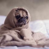 愛犬を室内飼いをする時に気をつけるポイントは?犬と一緒に暮らすのに大切なこと