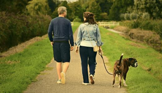 愛犬のリードの選び方!きちんと選んでお散歩をenjoyしよう