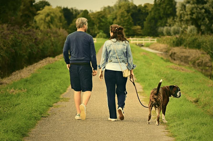 犬と散歩をするためにリードの選び方は大切!きちんと選んでお散歩をenjoyしよう