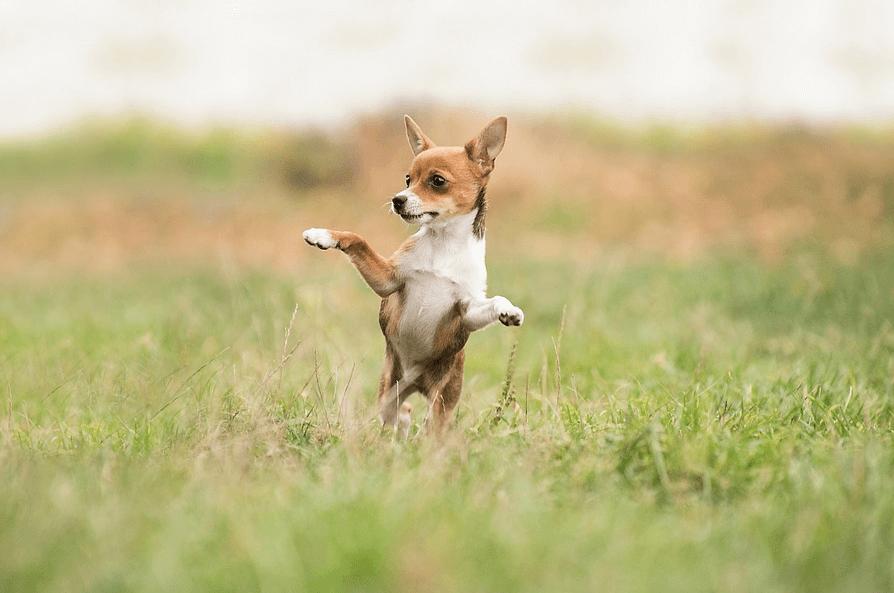 愛犬のリード選び