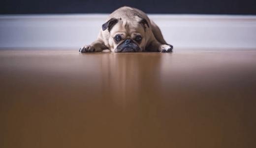 マナーベルトとは?オスの犬のマーキング対策以外にも使える便利アイテム