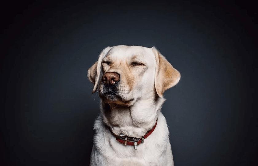 犬マナーベルト
