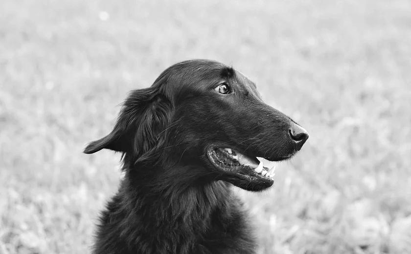 マナーベルト 犬