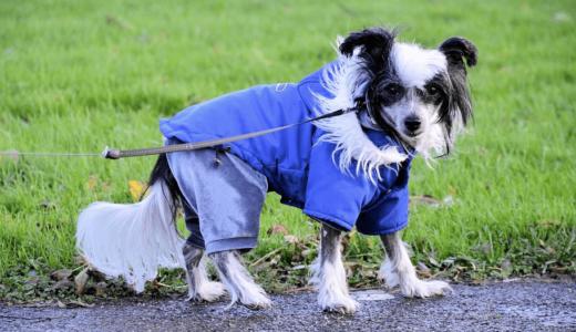 背中開きの犬服は簡単に脱着できるから用途の幅が広くておすすめ!