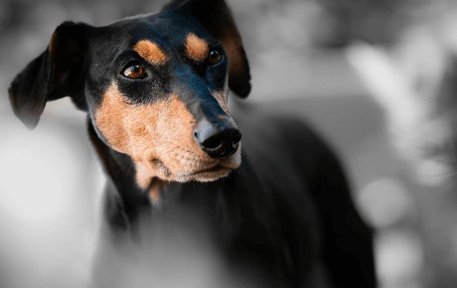 犬のしゃっくりが止まらない原因は?なんでしゃっくりをするのかについて!