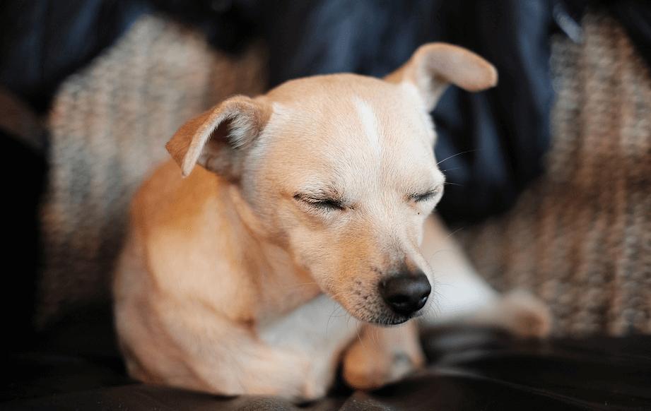 犬 しゃっくり