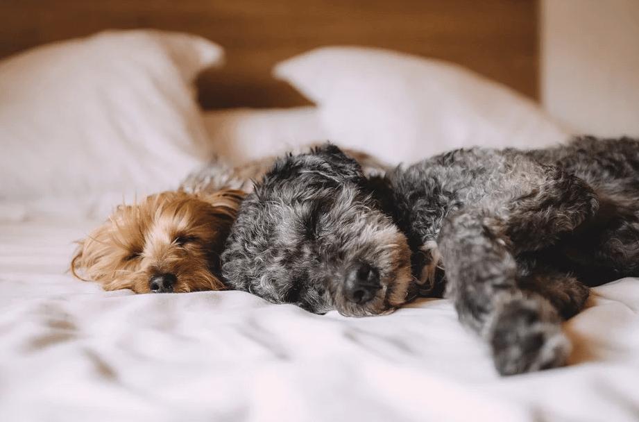 犬のしつけはすごく重要!人間社会のルールを愛犬に教えるために飼い主さんが意識するべきことは?
