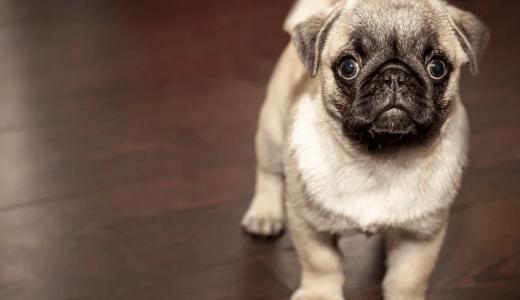 犬にお留守番をしてもらう時にストレスを与えないコツは?