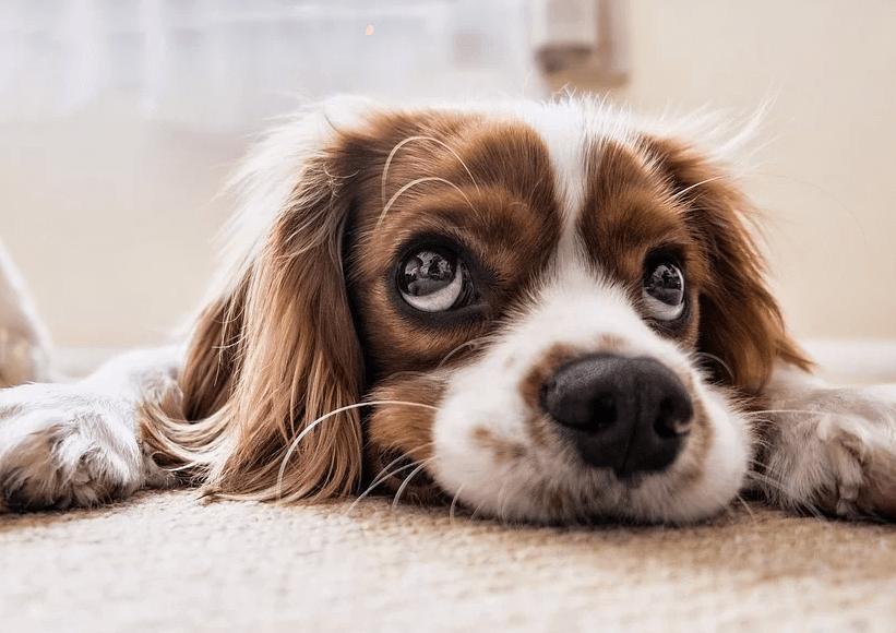 犬 留守番 悲しい