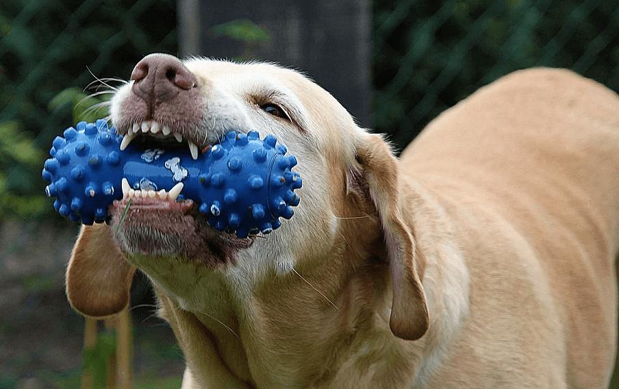 犬 噛み癖