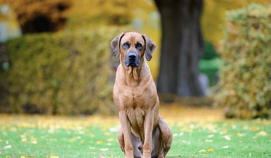 子犬の噛み癖の理由は?可愛い行動だけど…直した方が良い理由と方法