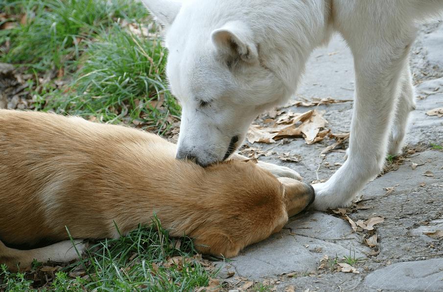 犬 舐める コミュニケーション