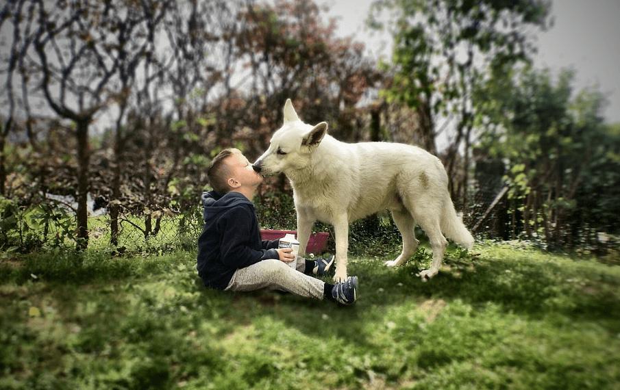犬が舐めてくる理由は?嬉しい行動だけど感染症には要注意!